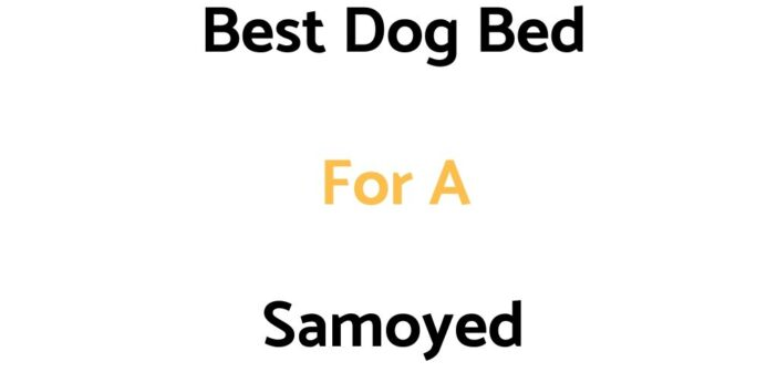 Best Dog Bed For A Samoyed: Top Beds, Reviews & Buyer's Guide