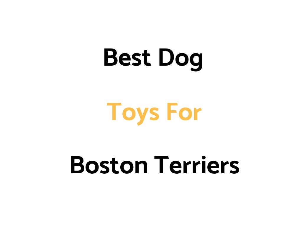 Best Dog Toys For Boston Terriers