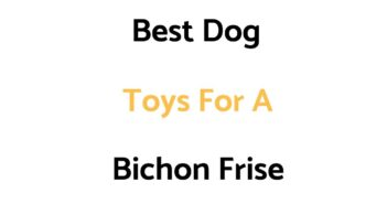 Best Dog Toys For A Bichon Frise