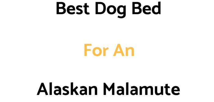 Best Dog Bed For An Alaskan Malamute: Top Beds, Reviews & Buyer's Guide