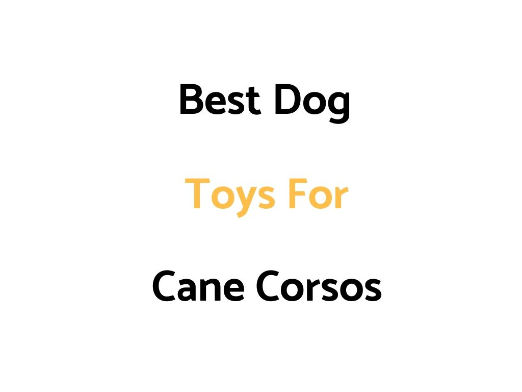 Best Dog Toys For Cane Corsos