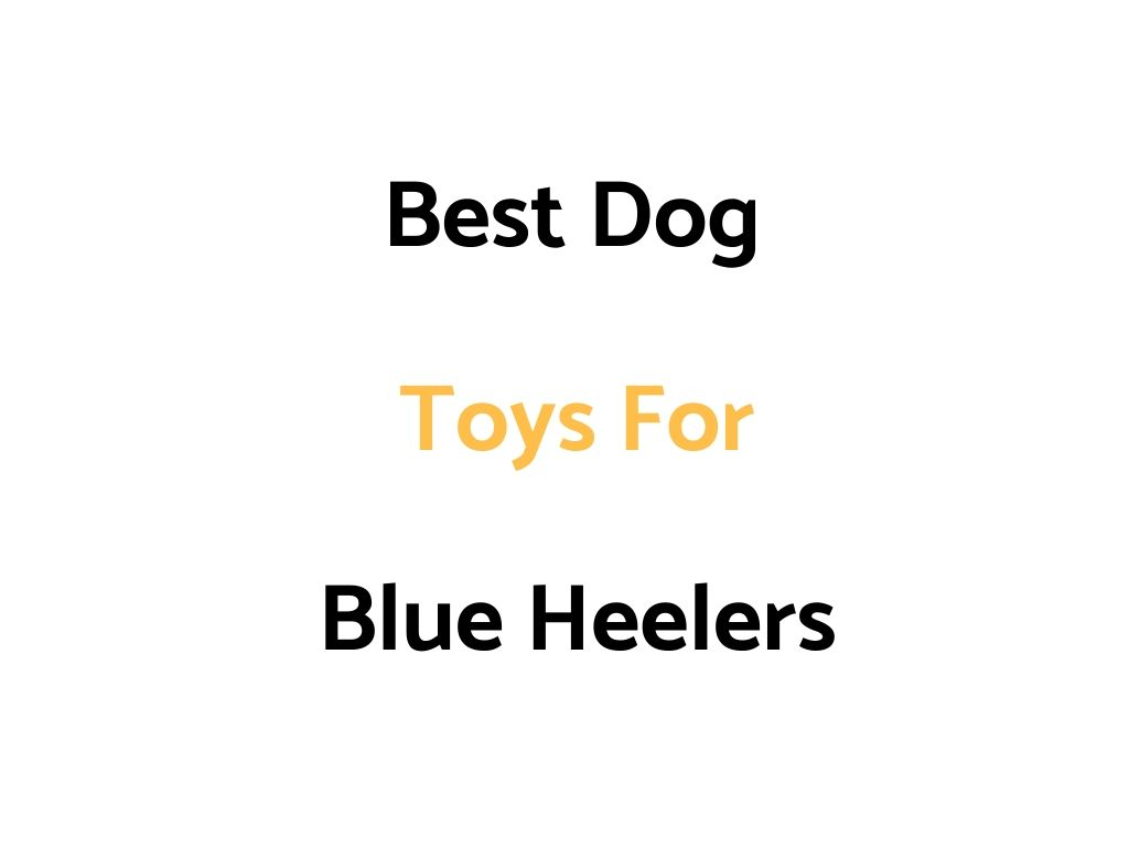 Best Dog Toys For Blue Heelers