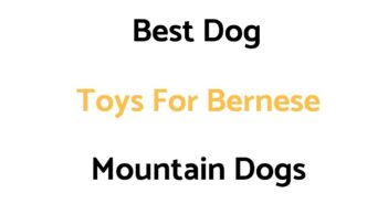 Best Dog Toys For Bernese Mountain Dogs