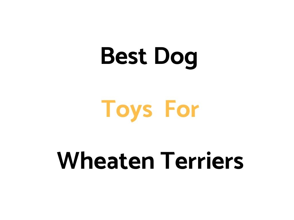 Best Dog Toys For Wheaten Terriers