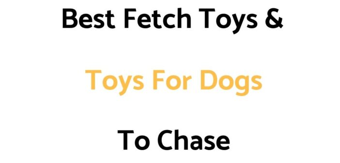 Best Fetch Toys For Dogs, & Toys For Dogs To Chase