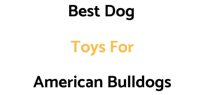 Best Dog Toys For American Bulldogs