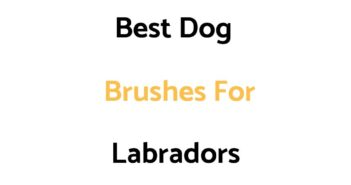 Best Dog Brushes For Labradors