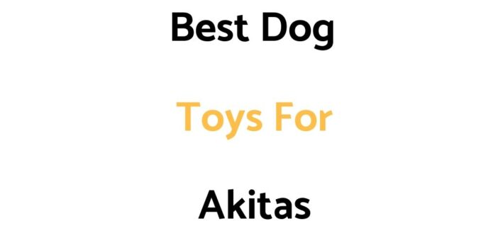 Best Dog Toys For Akitas