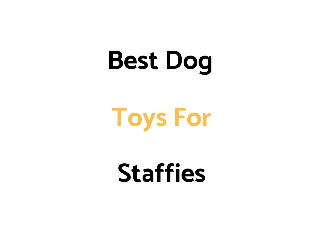 Best Dog Toys For Staffies