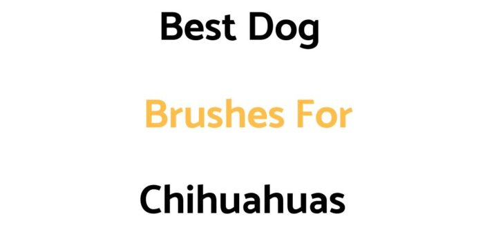 Best Dog Brushes For Chihuahuas