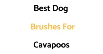 Best Dog Brushes For Cavapoos