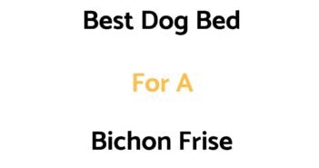 Best Dog Bed For A Bichon Frise: Top Beds, Reviews & Buyer's Guide