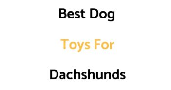 Best Dog Toys For Dachshunds