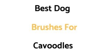 Best Dog Brushes For Cavoodles