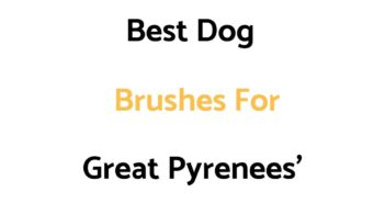 Best Dog Brushes For Great Pyrenees'