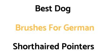 Best Dog Brushes For German Shorthaired Pointers