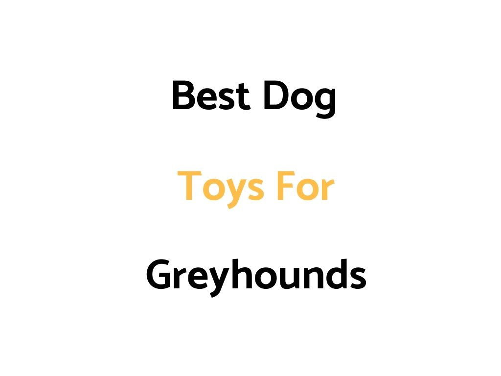 Best Dog Toys For Greyhounds