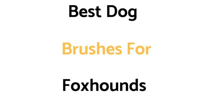 Best Dog Brushes For Foxhounds