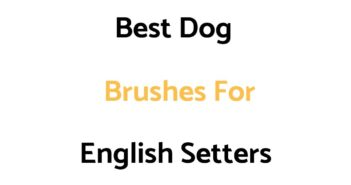 Best Dog Brushes For English Setters