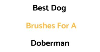 Best Dog Brushes For A Doberman