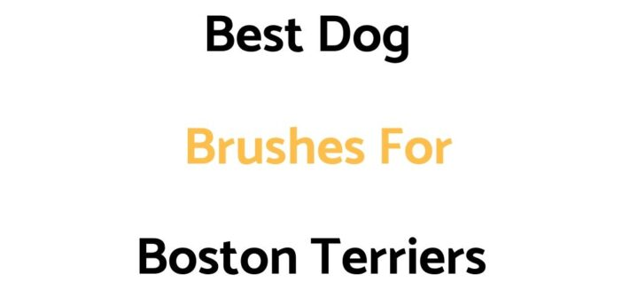 Best Dog Brushes For Boston Terriers