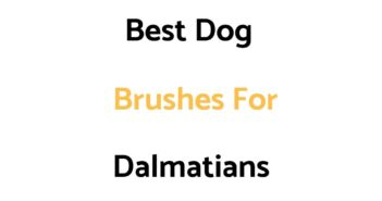 Best Dog Brushes For Dalmatians