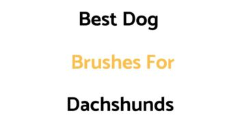 Best Dog Brushes For Dachshunds