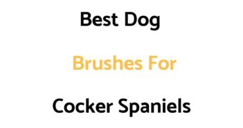 Best Dog Brushes For Cocker Spaniels
