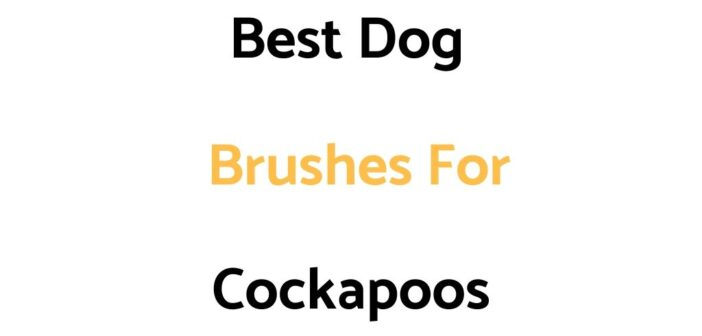 Best Dog Brushes For Cockapoos