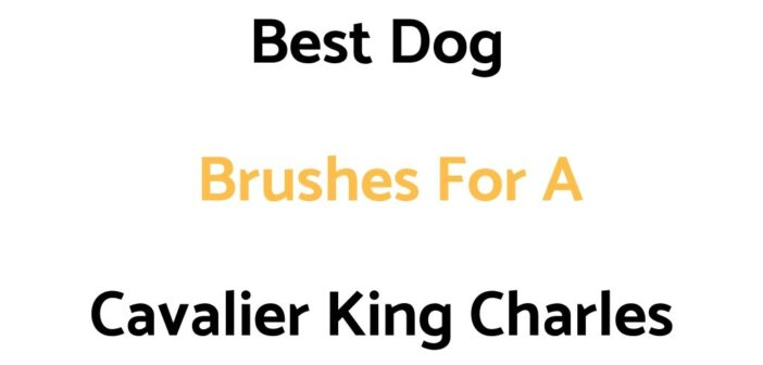 Best Dog Brushes For Cavalier King Charles'