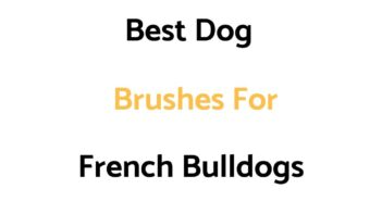 Best Dog Brushes For French Bulldogs