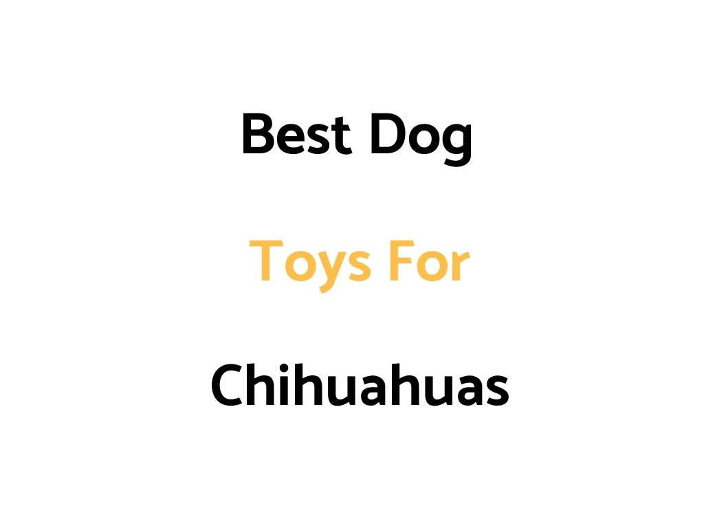 Best Dog Toys For Chihuahuas