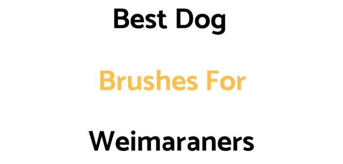 Best Dog Brushes For Weimaraners