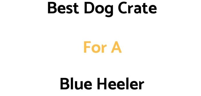 Best Dog Crate For A Blue Heeler: Top Crates, & Buyer's Guide