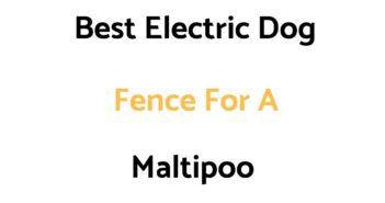 Best Electric Dog Fence For A Maltipoo