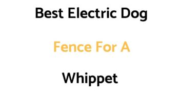 Best Electric Dog Fences For A Whippet
