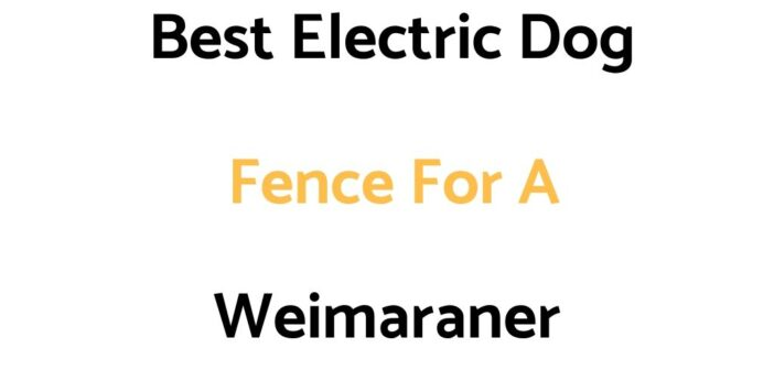 Best Electric Dog Fences For A Weimaraner