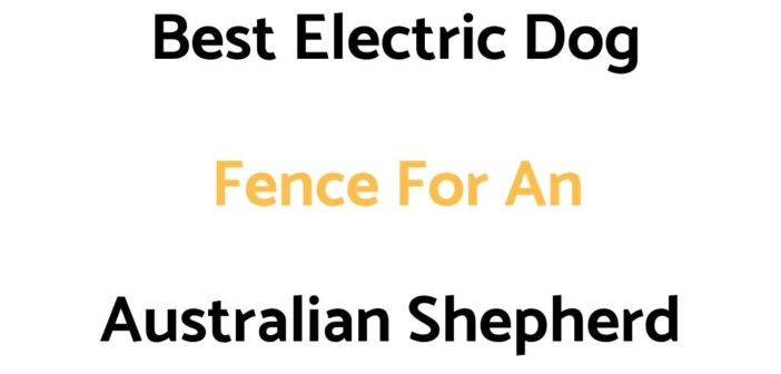 Best Electric Dog Fences For An Australian Shepherd
