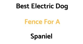 Best Electric Dog Fence For A Spaniel