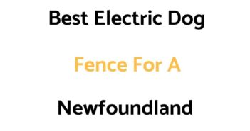 Best Electric Dog Fence For A Newfoundland