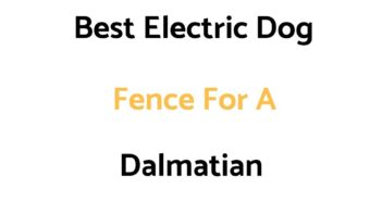 Best Electric Dog Fence For A Dalmatian