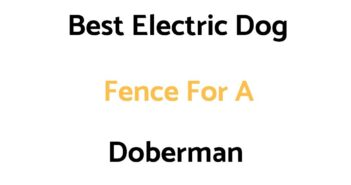 Best Electric Dog Fence For A Doberman