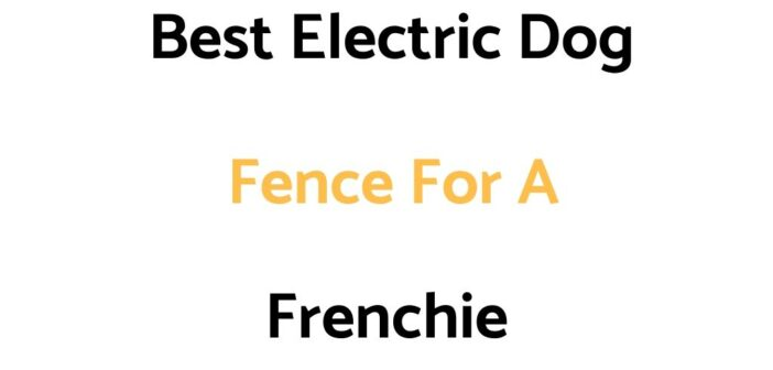 Best Electric Dog Fence For A Frenchie
