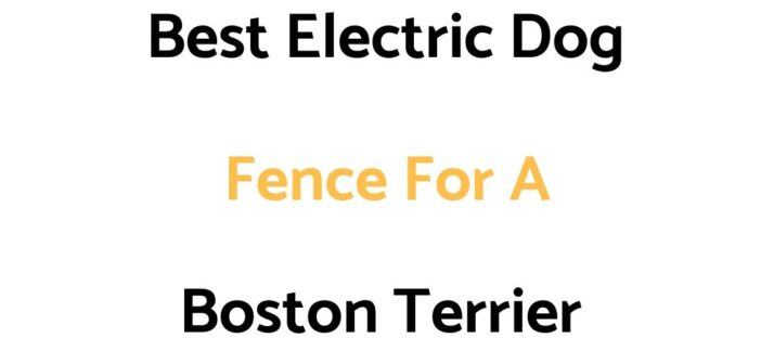 Best Electric Dog Fence For A Boston Terrier