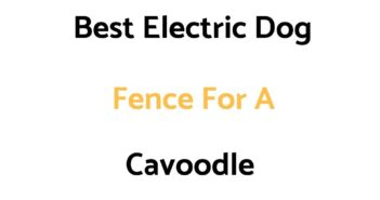 Best Electric Dog Fence For A Cavoodle