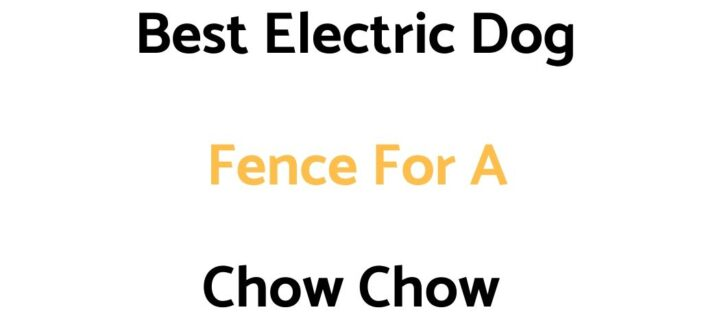 Best Electric Dog Fence For A Chow Chow