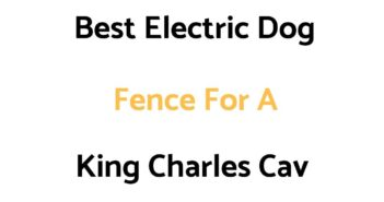 Best Electric Dog Fence For A Cavalier King Charles