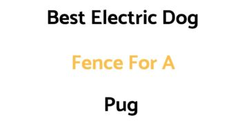 Best Electric Dog Fence For A Pug