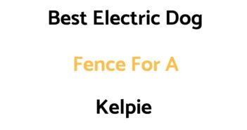Best Electric Dog Fence For A Kelpie