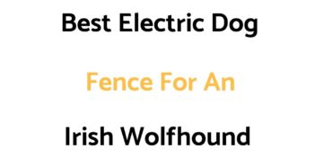 Best Electric Dog Fences For An Irish Wolfhound